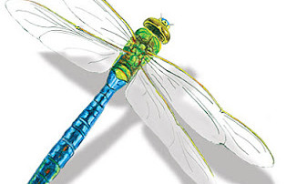 What a dragonfly can teach women about philanthropy